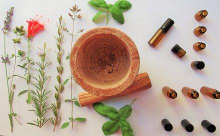 Olejek herbaciany – zdradzamy najważniejsze informacje, właściwości oraz zastosowanie.